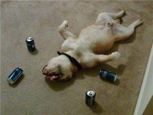 nhậu xỉn