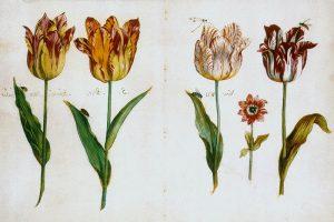 Hội chứng hoa tulip là gì? So sánh hội chứng hoa tulip và bitcoin
